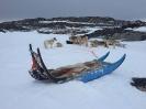 Fiskeri fra isen_6