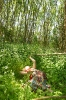 Wandering woods_2